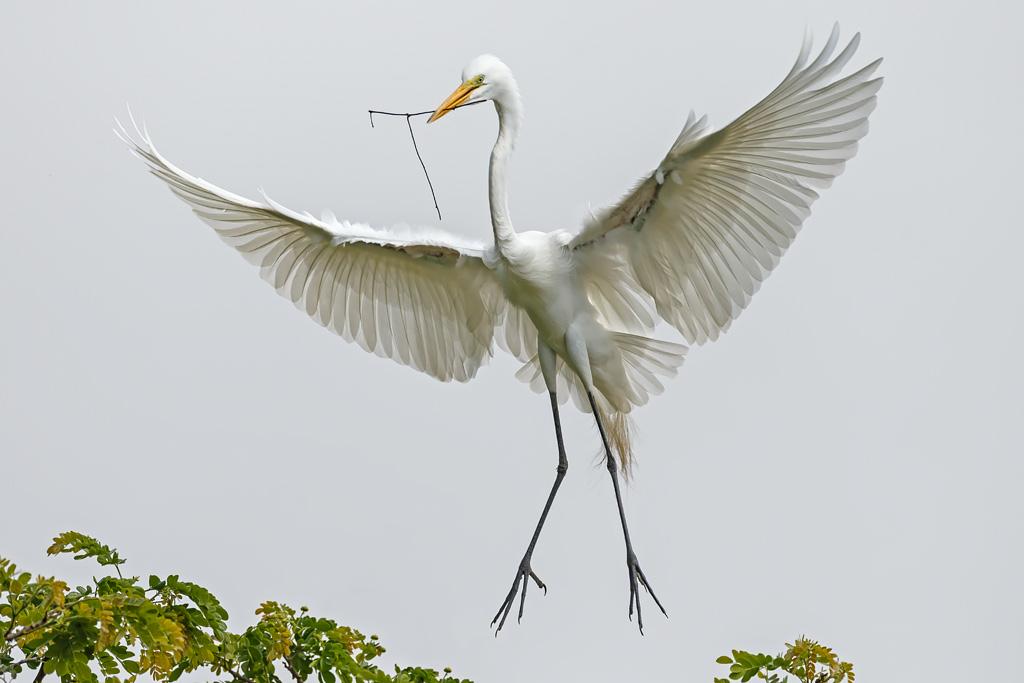 Egrets, Herons, Storks & Ibises
