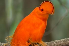 Worldwide Endangered Animal List