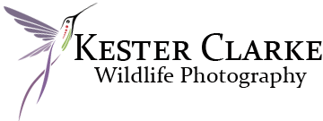 Kester Clarke Wildlife Photography